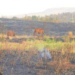 Incêndios florestais ameaçam animais silvestres na Caatinga