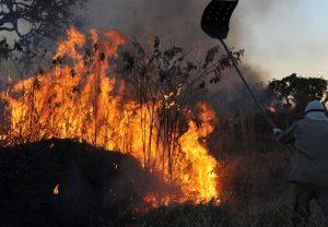 Amazônia tem pior mês de junho em 13 anos por incêndios florestais