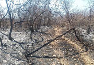 Primeiro semestre deste ano tem menor índice de queimadas desde 2011 no Ceará