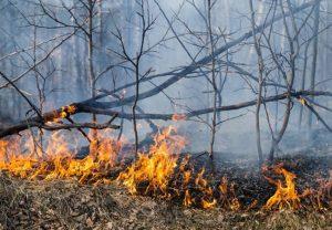 Agosto é o mês com maior número de queimadas em 2020