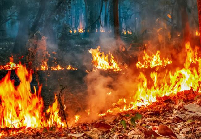 Instituto Brasília Ambiental iniciou o planejamento para combate a incêndios florestais em 2021